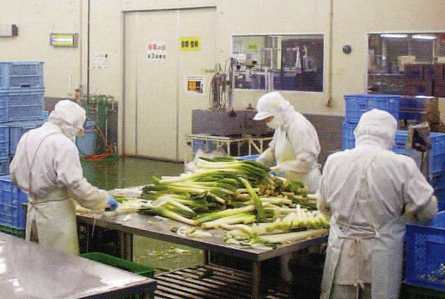 [1]30代~70代の男女メンバー活躍中。 温度管理されたクリーンな環境で快適に働けますよ♪ 扱う野菜のひとつがたまねぎ。抗酸化作用に優れているので、ラインメンバーたちは本当に風邪知らず^皿^